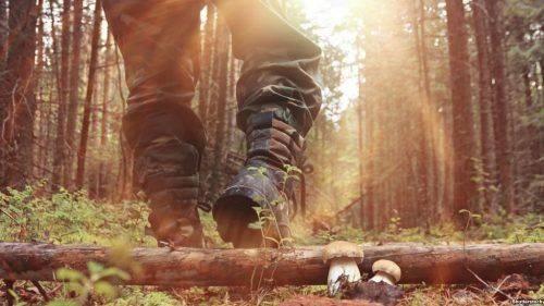 На Уманщині зафіксовано шість випадків отруєння грибами
