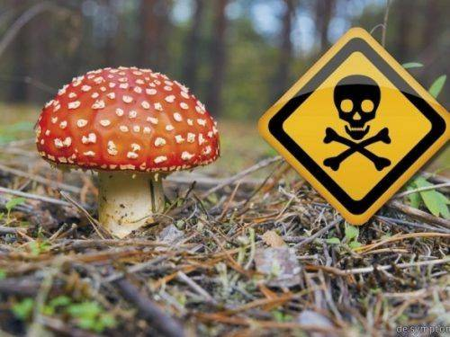 З початку грибного сезону на Черкащині зафіксовано понад 30 випадків отруєнь