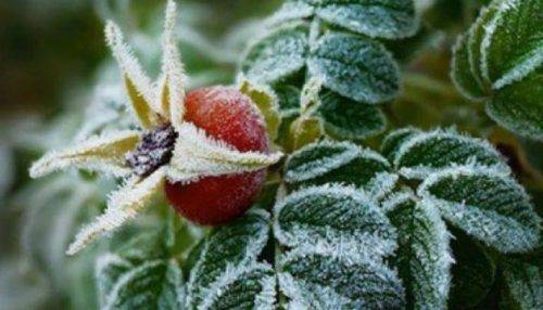 У Черкаській області очікуються заморозки