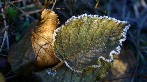 На Черкащині очікується похолодання із заморозками