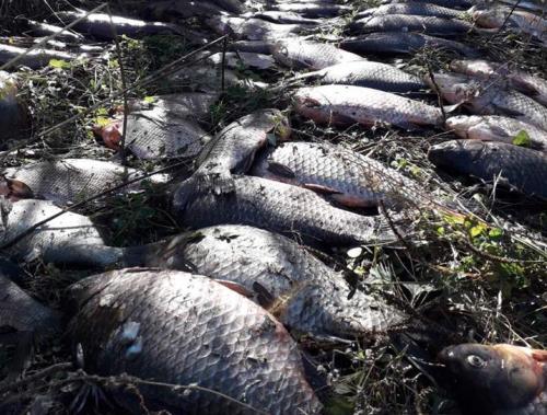 На Черкащині браконьєри наловили майже 80 кг риби (фото)