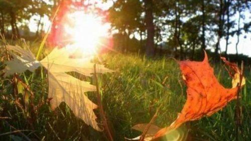 Найближчим часом на Черкащині дещо потепліє