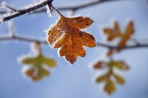 Наступного тижня на Черкащині очікується похолодання