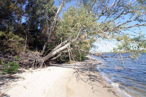 Черкаські фахівці попереджають про екологічне лихо, яке загрожує акваторії Дніпра