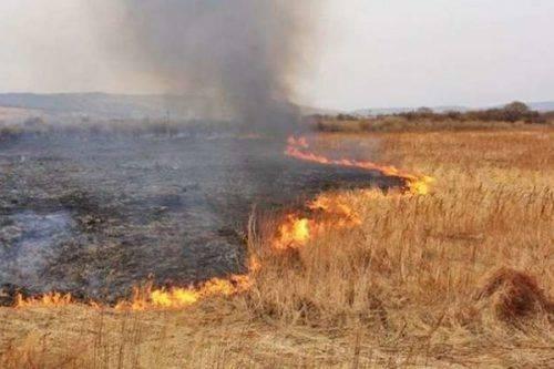 Черкащани платитимуть штрафи за спалювання сухої трави