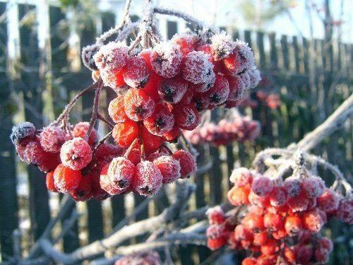 У кінці жовтня на Черкащині очікуються істотні заморозки