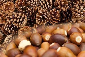 Лісівники Черкащини заготовили понад 70 тонн лісового насіння