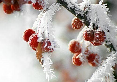 У найближчу добу на Черкащині очікується похолодання