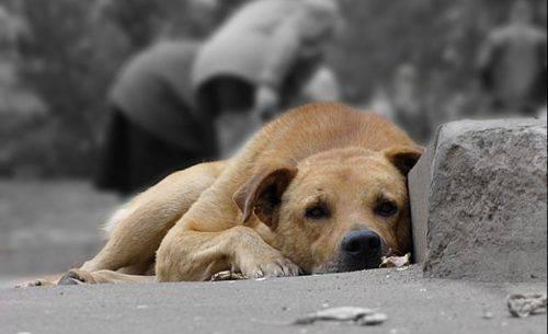 """""""Пекельні муки"""": на Черкащині невідомі труять собак (відео)"""