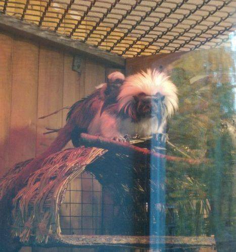 Черкаський зоопарк готується до зими