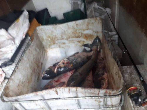 На Черкащині затримали браконьєрів, які наловили риби майже на 54 тис. грн (фото)