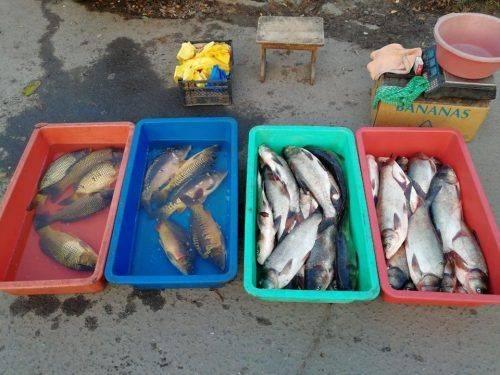 За тиждень на Черкащині браконьєри наловили риби майже на 70 тис. грн (фото)
