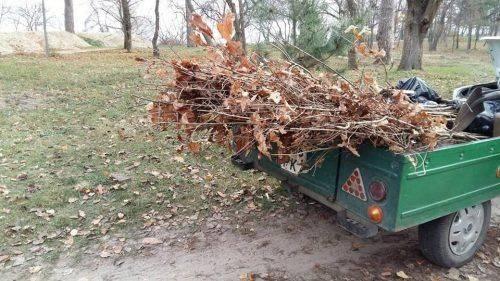 В одному із парків Черкас висадили дві сотні саджанців дуба (фото)