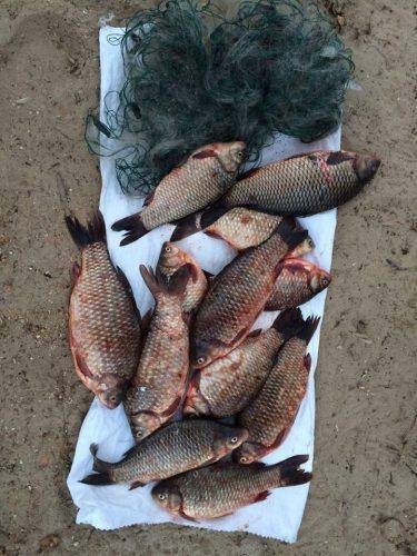 На Черкащині браконьєри наловили риби майже на 39 тис. грн (фото)