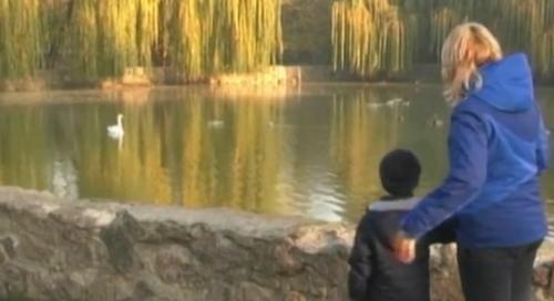 На Черкащині подружжя врятувало лебедів від неминучої загибелі (відео)