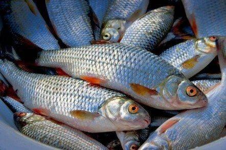 Черкащина серед лідерів з виробництва риби в Україні