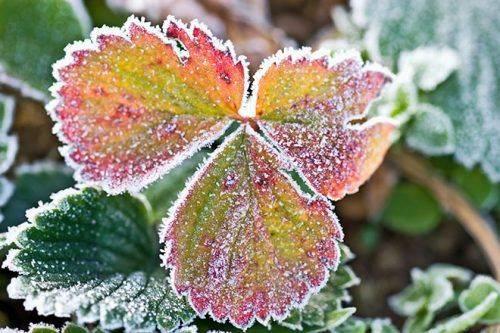 Найближчим часом на Черкащині очікуються заморозки