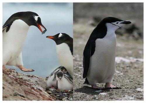 Перуанські пінгвіни та димчасті леопарди: що нового з'явиться у черкаському зоопарку