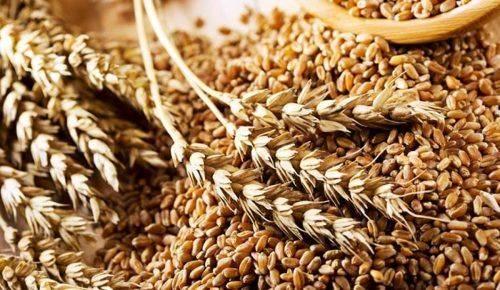 Черкащина у трійці лідерів за врожайністю зернових