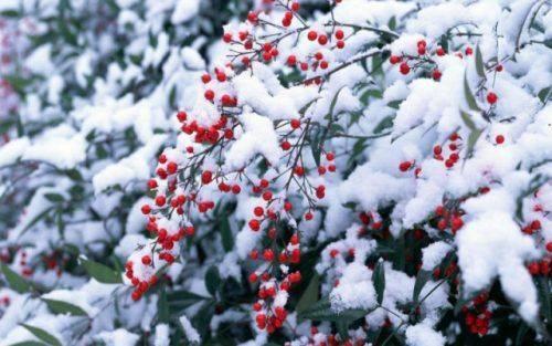Якої погоди варто чекати черкащанам у грудні