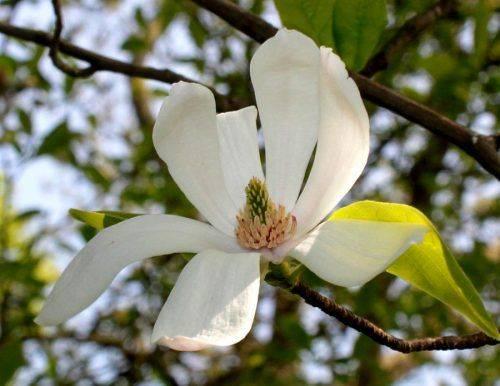 В одному із парків Черкас висадили рідкісні декоративні рослини