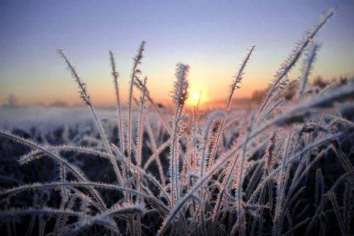На Черкащині очікуються заморозки