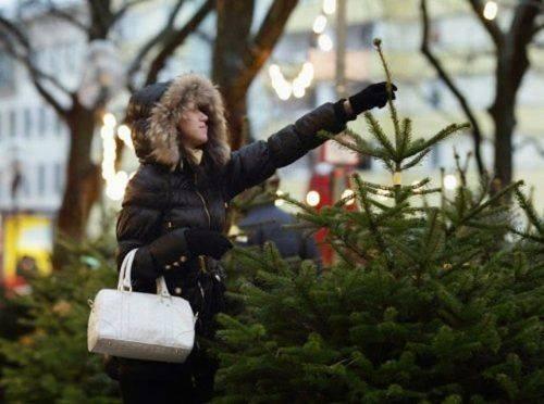 Як у Черкасах перевіряли місця торгівлі новорічними ялинками (відео)