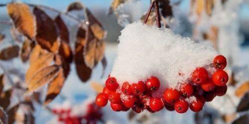 Листопад на Черкащині став найхолоднішим за останні 20 років