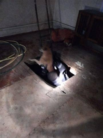 На Черкащині рятували собаку, який опинився у пастці