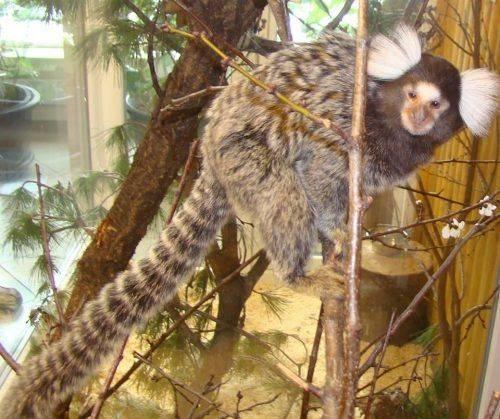 У Черкаському зоопарку святкують Всесвітній день мавп