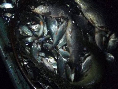 На Черкащині затримали браконьєра, який наловив 300 кг риби