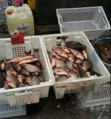 За тиждень на Черкащині незаконно виловили 470 кг риби