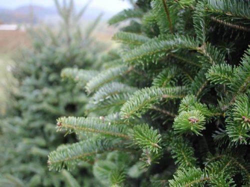У Черкасах визначили місця для сезонної торгівлі новорічними ялинками