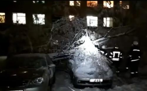 У Черкасах дерево впало на два автомобілі (відео)