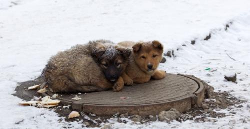 Набайдужих черкащан закликають до порятунку безпритульних тварин