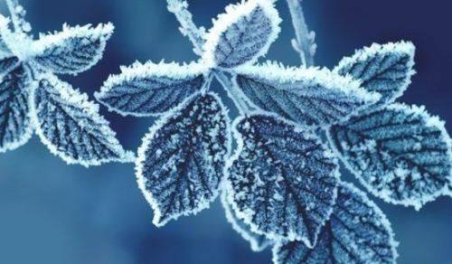 На Новий рік на Черкащині очікується мороз