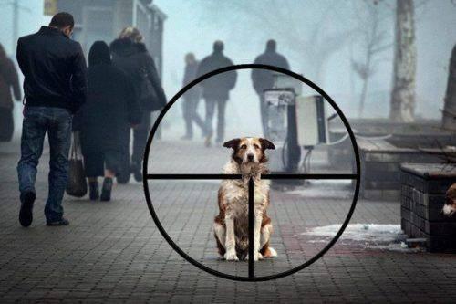 На Черкащині посеред вулиці невідомий застрелив собаку