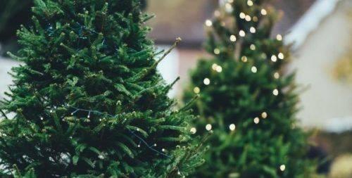 Скільки коштуватиме новорічна ялинка на Черкащині цього року