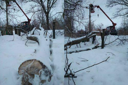 У селі на Черкащині через старий горіх знеструмлено кілька абонентів