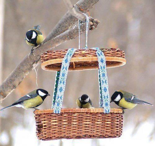 Черкащани підгодовують птахів у міських парках (відео)