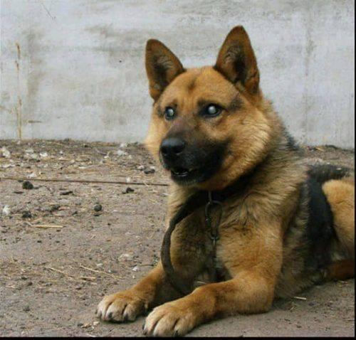 Черкащан прохають врятувати собаку, якого покинули господарі