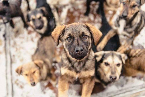 Волонтери Черкащини прохають допомагати безпритульним тваринам, які мерзнуть на вулиці