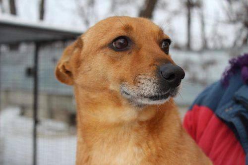 На Черкащині шукають господарів собаки, який загубився (фото)