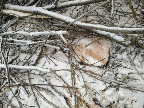 """На Черкащині """"чорні лісоруби"""" накрали лісу майже на 70 тисяч гривень (фото)"""