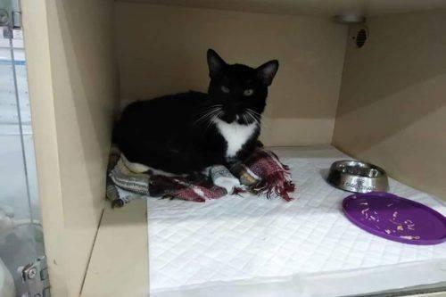 Збили і залишили помирати: черкащан прохають допомогти зібрати кошти на лікування кота