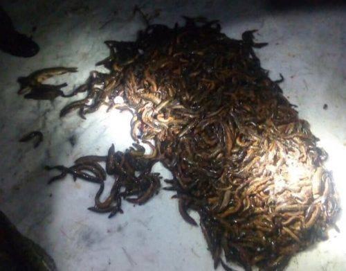 На Черкащині браконьєри наловили рибу майже на 43 тисячі гривень