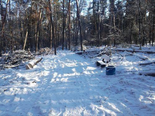 Торік у Сосновому бору зрізали 200 дерев (відео)