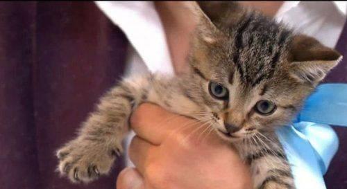 Волонтери поділилися щасливими історіями безхатніх тварин, які знайшли нових господарів