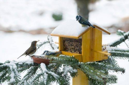 Сало, хліб, чи пшоно?: черкащанин розповів, як годувати птахів узимку
