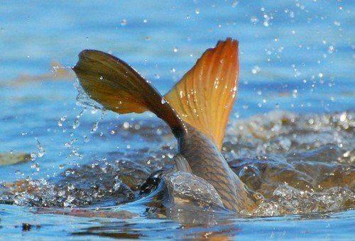 На Черкащині затверджено перелік дозволених місць для риболовлі
